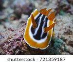 magnificent chromodoris ... | Shutterstock . vector #721359187