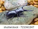 beetles   insect   giraffe stag ... | Shutterstock . vector #721361347