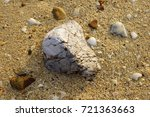 nature at the beach | Shutterstock . vector #721363663