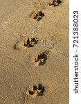 footprints in the sand | Shutterstock . vector #721388023