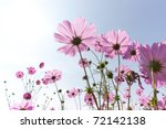 Blossom Pink Flower In A...