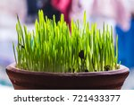 spike of wheat growing in a pot ... | Shutterstock . vector #721433377
