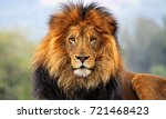 king lion | Shutterstock . vector #721468423