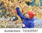 curious kid girl collects rowan ... | Shutterstock . vector #721529557