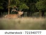 red deer | Shutterstock . vector #721540777