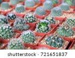 baby cactus in garden | Shutterstock . vector #721651837
