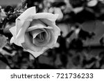 black and white monochrome... | Shutterstock . vector #721736233