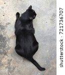 Stock photo top view of black cat lying on concrete floor thai cat 721736707