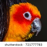 side view of parakeet parrot | Shutterstock . vector #721777783
