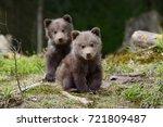wild brown bear cub close up | Shutterstock . vector #721809487