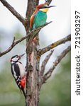 european bee eater and great... | Shutterstock . vector #721903297