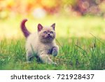 cute little kitten walking... | Shutterstock . vector #721928437