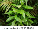 green leaf of a palm | Shutterstock . vector #721948957