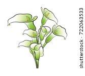 green   black calla lily flower ... | Shutterstock .eps vector #722063533