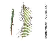 fern  watercolor  can be used... | Shutterstock . vector #722208427