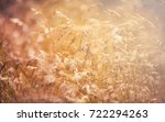 meadow at sunset close up ... | Shutterstock . vector #722294263
