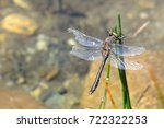 colorful dragonfly in the water ... | Shutterstock . vector #722322253