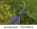beautiful bug sits on a blue... | Shutterstock . vector #722533813