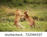 lion cubs playing  masai mara | Shutterstock . vector #722584537