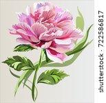 set bouquet of peonies  vector | Shutterstock .eps vector #722586817