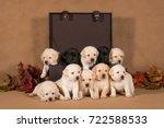 a group of ten labrador puppies ...   Shutterstock . vector #722588533