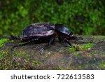 brown rhinoceros beetle female... | Shutterstock . vector #722613583