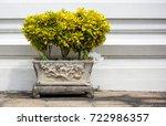 croton plant in pot | Shutterstock . vector #722986357