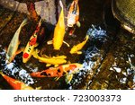colorful fancy carp fish or koi ... | Shutterstock . vector #723003373
