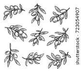sketches of light olive berries ... | Shutterstock .eps vector #723054907