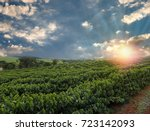 plantation   sunset at the... | Shutterstock . vector #723142093