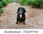 Portrait Of A Dog  Puppy  Bree...
