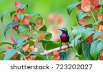 Stock photo the colorful bird and beautiful flower 723202027