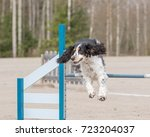 English Springer Spaniel Jumps...