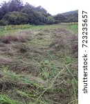 Small photo of Cut down vegetation in an agrarian landscape