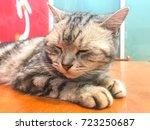 A Young Cute Gray Cat Look Lik...