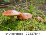 Three Mushrooms In The Moss