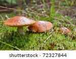 Three Mushrooms In The Moss
