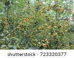apple tree | Shutterstock . vector #723320377