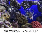 lionfish with striped pattern... | Shutterstock . vector #723337147