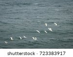 a flock of seagulls is flying... | Shutterstock . vector #723383917