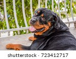 rottweiler male head shot... | Shutterstock . vector #723412717