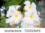 roadside flowers | Shutterstock . vector #723523693