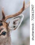 Deer in winter time.