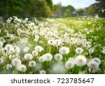 lot of dandelions close up on... | Shutterstock . vector #723785647