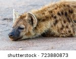 close up of a resting hyena | Shutterstock . vector #723880873