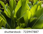 Green Plants In Against Day  I...