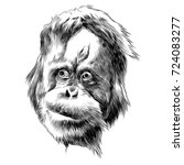 Orangutan Monkey Sketch Vector...