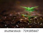 cannabis marijuana flower from... | Shutterstock . vector #724185667