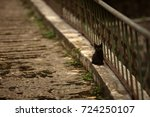 Stock photo sad little black kitten sitting lonely on the road 724250107