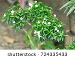 small white flowers in the